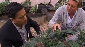 Medical Marijuana4
